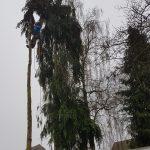 Het verwijderen van 2 hoge, slanke coniferen.